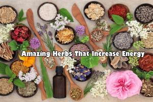 Amazing Herb That Increase Energy