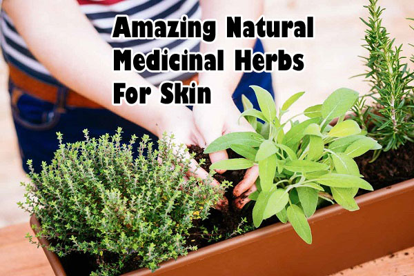 Amazing Natural Medicinal Herbs For Skin