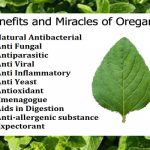 Oregano- The Cure Against Multiple Diseases. Benefits and Miracles of Oregano