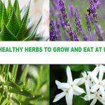 Best Healthy Herbs To Grow And Eat At Home