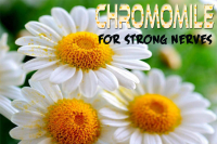 Chamomile For Strong Nerves