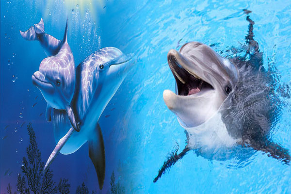 Dolphins understand Quark sounds