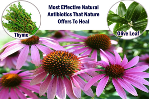 Effective Natural Antibiotics