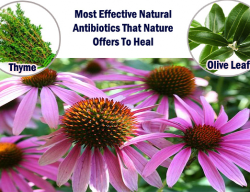 Know The Most Effective Natural Antibiotics That Nature Offers To Heal