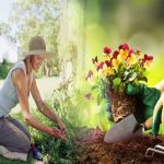 Gardening and All the Health Benefits that We Usually Ignore