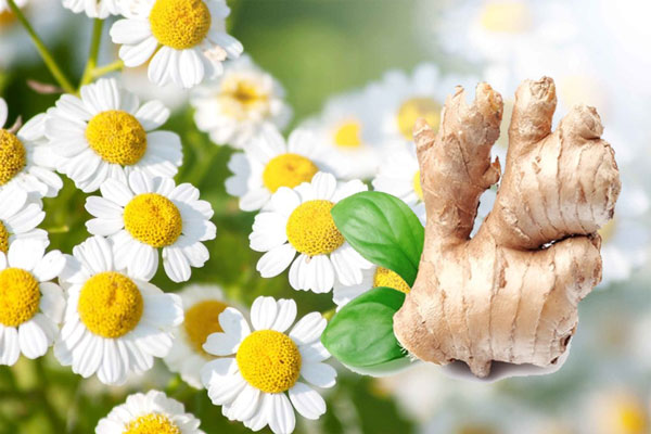 Ginger and Feverfew