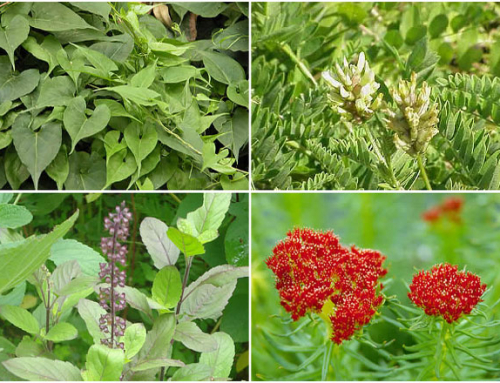 Good Natural Herbs To Increase Energy And Vitality