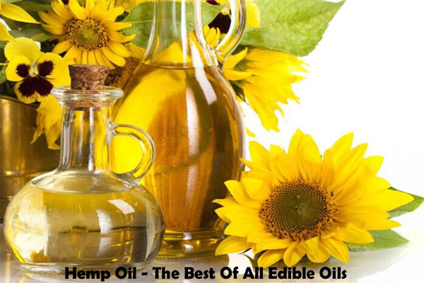 Hemp Oil - The Best Of All Edible Oils