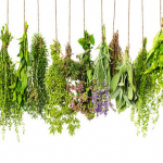 Highly Effective Herbs For Losing Weight