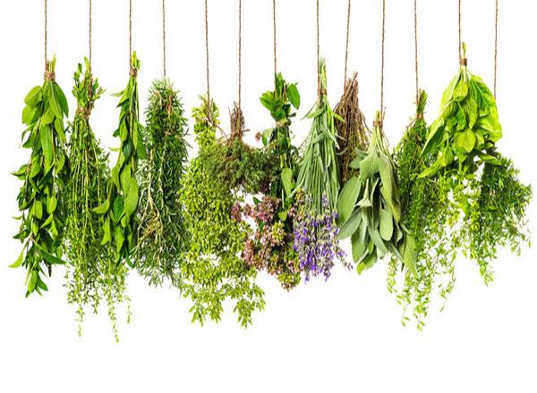 Effective Herbs