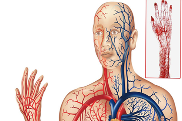 How To Make Better Blood Circulation
