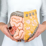 How You Can Maintain Your Digestive System