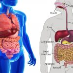 A Simple Thing That Can Improve Dramatically Your Digestive Tract And Health Overall