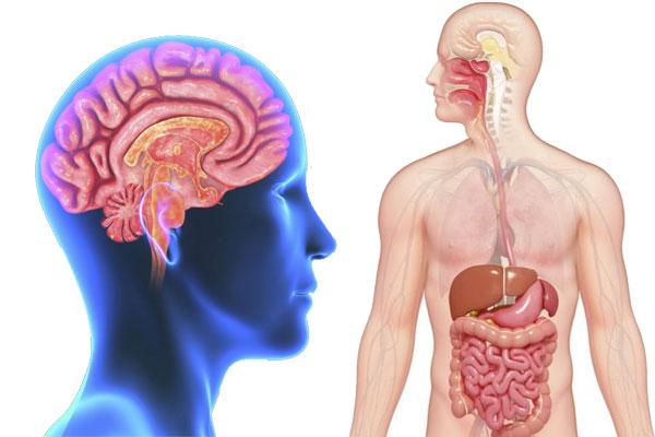 Intestinal System