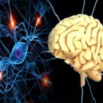 How to Keep Your Brain Alive For Longer Periods