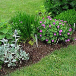 Kinds Of Herb Garden Plants