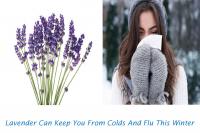 Lavender for flu