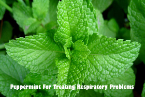 Peppermint for treating respiratory problems