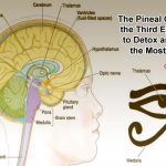 The Pineal Gland or the Third Eye. How to Detox and Use the Most of It