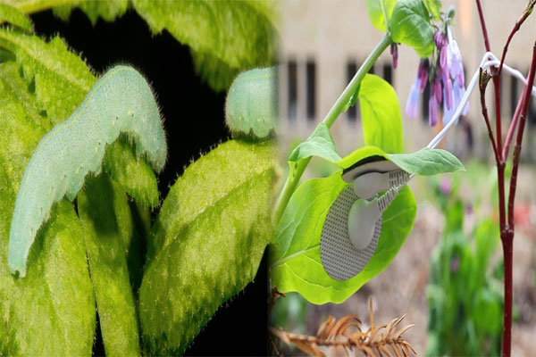 Plants generate certain sounds
