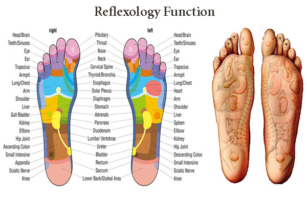 Reflexology Function
