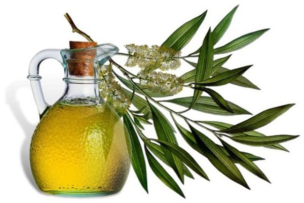 Tea Tree herb