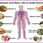 Vitamins And Their Role In Body Function