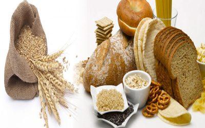 Wheat Gluten Promotes Obesity
