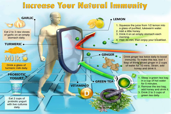 herb Increase Your Natural Immunity