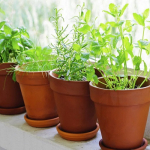 Ways To Plant Your Herbs