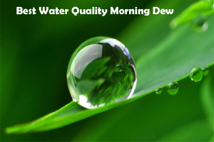 Best Water Quality Morning Dew