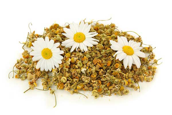 natural herb of Chamomile