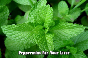 peppermint for liver