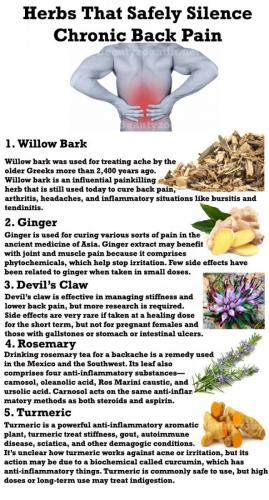 6 Herbs That Safely Silence Chronic Back Pain
