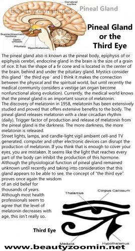 The Pineal Gland or the Third Eye