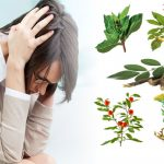 Best Plants Adaptogens That Can Reduce Stress In Your Everyday Life