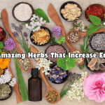 Amazing Herbs That Increases Energy, Vitality, And Adaptability