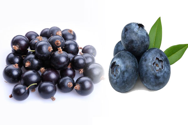 Blueberries and currants