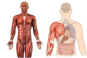 Body is Acidic
