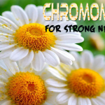 Relaxing Herb Chamomile For Strong Nerves