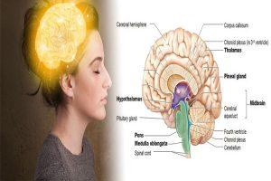 Detoxify Calcification Pineal-gland