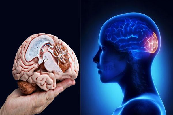 Heal brain injuries