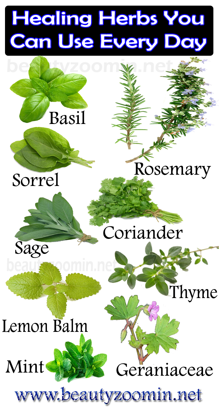 Healing Herbs You Can Use Every Day
