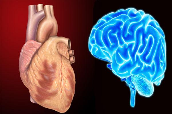 Heart or brain