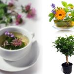 Grow Your Own Herbs for Tea But How