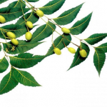 How To Cure Dandruff With Neem Leaves