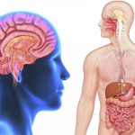 8 Ways of Restoring the Equilibrium of Intestinal System and to Improve Mental Health
