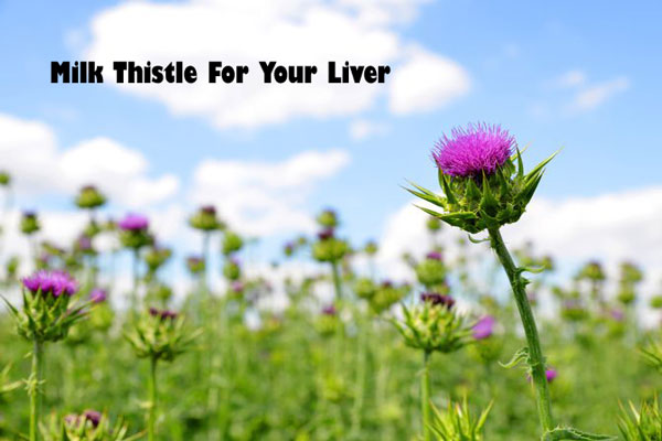 Milk Thistle for liver