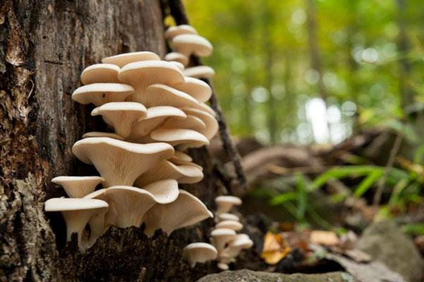 Mushrooms on the tree