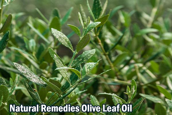 Natural Remedies Olive Leaf Oil